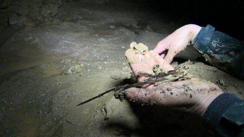 Una colección de restos orgánicos, para la datación del carbono 14.