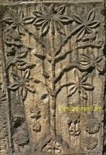El árbol de la vida-Bosnia