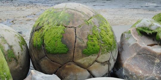 Esferas Moeraki cubiertas de algas