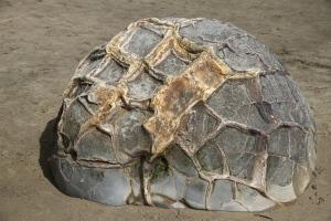 Parece una tortuga