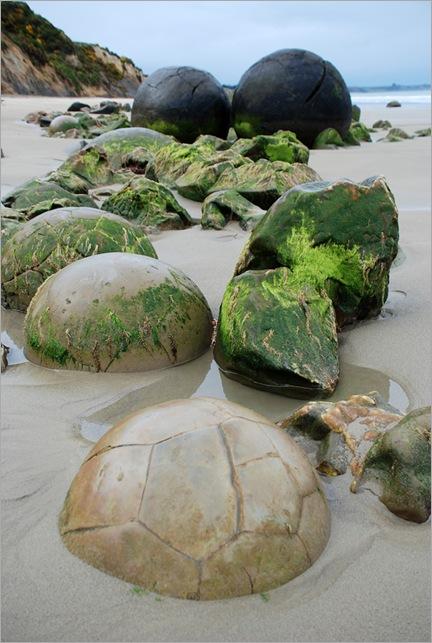 Misteriosas esferas Moeraki cubiertas de algas