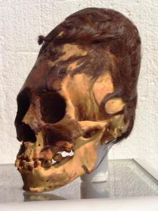 Cabeza elongada con restos de pelo rojizo encontrada en Paracas - Perú