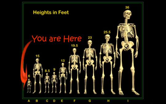 Un listado de esqueletos encontrados de entre 6 - 36 pies ( 2.13 - 10.973m)