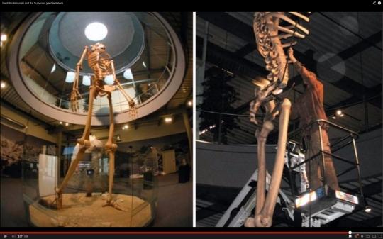 Esqueleto gigante expuesto dentro de un museo en EEUU.