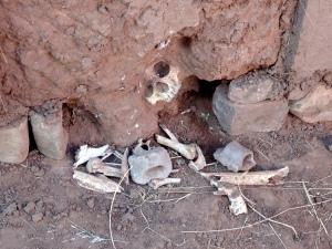 Aquí se puede ver otra calavera con cráneo, descubierto en un antiguo muro de tierra, que aún no fué desterrado del todo