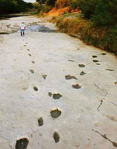 Huellas humanas que cruzan huellas de dinosaurios de 3 dedos, fosilizadas en el lecho del río Paluxy.
