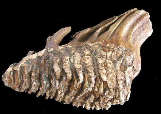 Huesos fosilizados de un mamut también muestran cómo este paisaje, que una vez fue una de las colinas y valles, en lugar del mar
