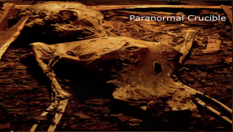 Cuerpo momificado de un ET encontrado en una cámara subterránea