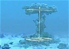 exodus-mushroom-superimposed01-sm-230x165.jpg