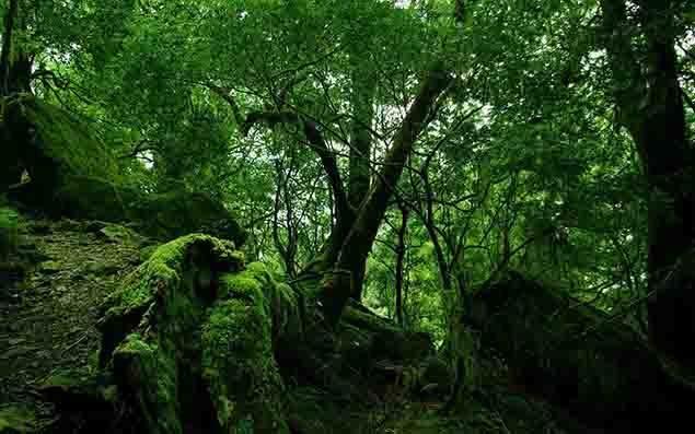 Fondos-de-pantalla-de-flora-y-vegetación-aa.jpg